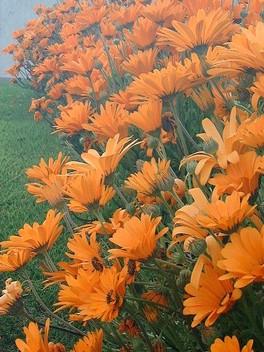 Flower2_8